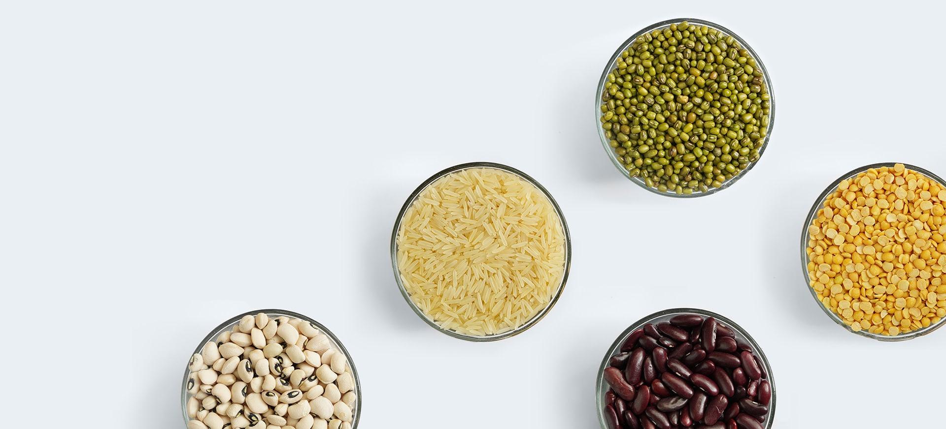 Shah Nanji Nagsi Exports agricultural theme